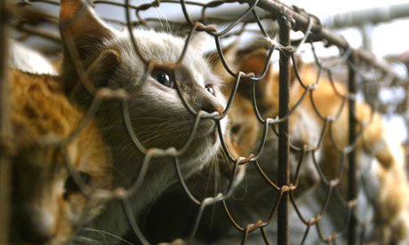 Caged cats after being rescued from a Tianjin market that trade cats for meat and fur