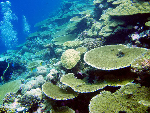 In Pictures Wildlife Of The Chagos Islands World News