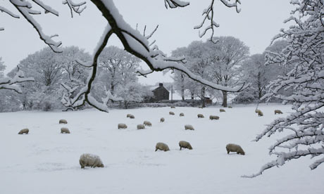 Bury, Greater Manchester: Sheep in heavy snow on Holcombe Hill