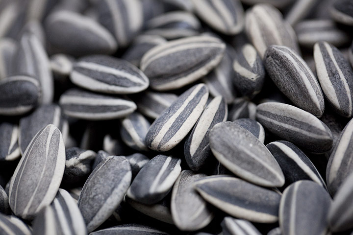 Turbine Hall update: A close-up photograph of some of the seeds