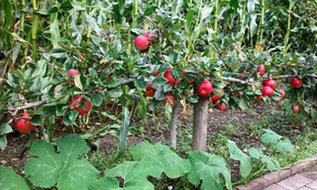 How to grow fruit in a small space my collections - Fruit trees in small spaces decoration ...