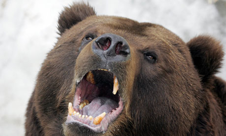 Russian bears treat graveyards as giant refrigerators