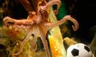Paul the psychic octopus