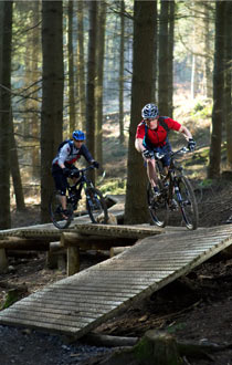 Mountain bikers in Haldon Forest park, Devon.