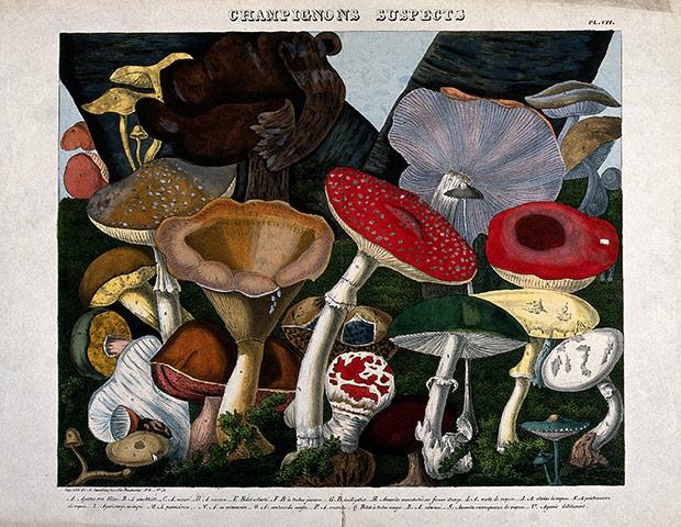 Некоторые виды грибов, включая галлюциногены