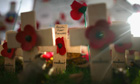 Poppies in a garden of remembrance on Armistice Day