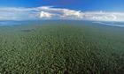 The Amazon Rainforest near Nova Olinda
