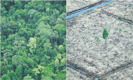 Left, the Sungai Sembilang National Park, Sumatra; right, an area cleared by paper companies.