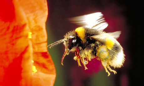 Bumble Bee Breakthrough in