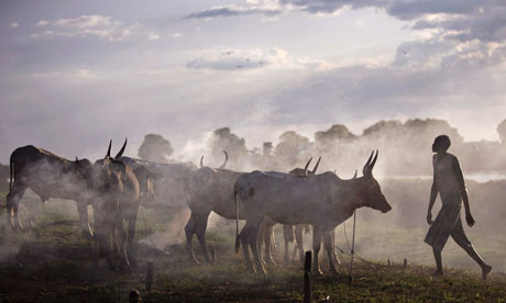 Cattle belonging to the Nuer tribe, Sudan