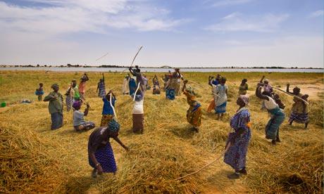 Quelle agriculture pour nourrir le monde ?