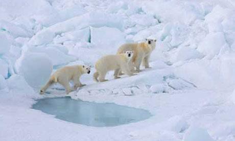 Extra Polar