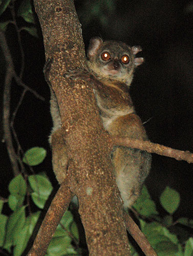 EARTH HOUR: Meet the world's endangered primates-photos