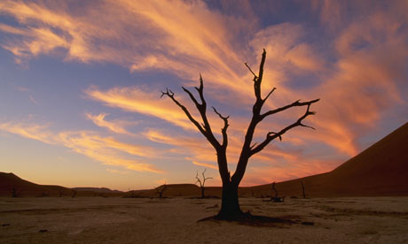 Drought in Namib-Naukluft Park, Namibia