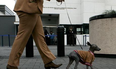 Man Walking Dog Driving Car