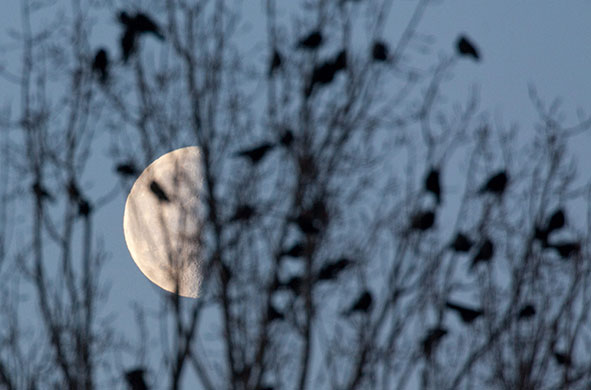 24 hours in pictures: half moon at morning sky in frankfurt an der