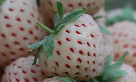 http://static.guim.co.uk/sys-images/Guardian/Pix/pictures/2010/4/1/1270122841640/Pineberry-001.jpg