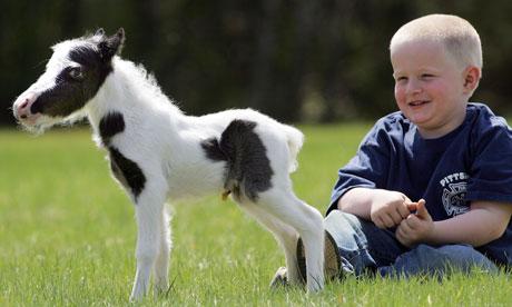 Einstein-the-smallest-hor-005 jpgSmallest Horse In The World 2014