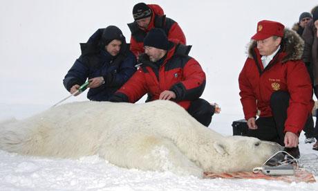 Putin polar bear