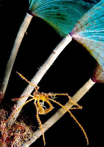 underwater photography : The Wildlife Trusts underwater photography competition
