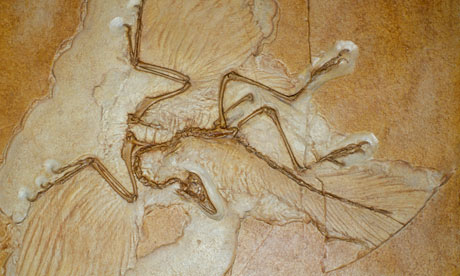 would not have supported Archaeopteryx Not A Transitional Form