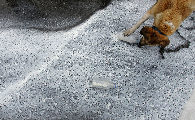 Greek riots dog: 6 April: A dog drinks from a bottle of free fresh milk