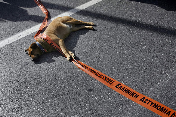 Greek riots dog: 25 November 2008: A stray dog plays with police tape