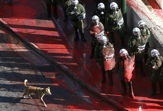 Greek riots dog: 18 December 2008: A dog walks past police officers covered in paint