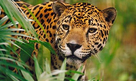 5 animales en peligro de extincion en mu00e9xico