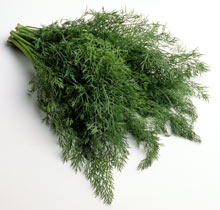 Bunch of dill sprigs