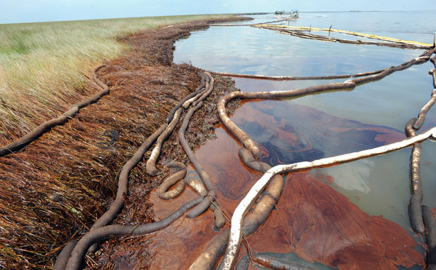 in pictures  bp oil spill