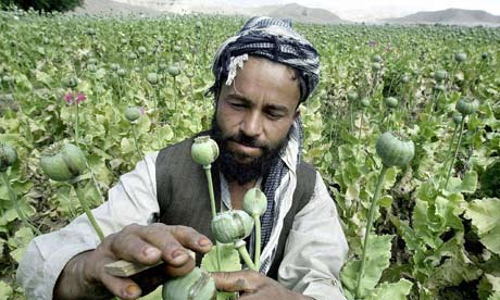 Afghan farmer with opium crop