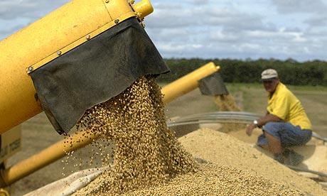 Brazil soy cultivation