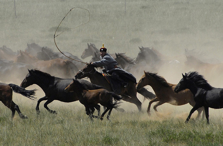 24 hours: A participant takes part in a lassoing competition in Mongolia