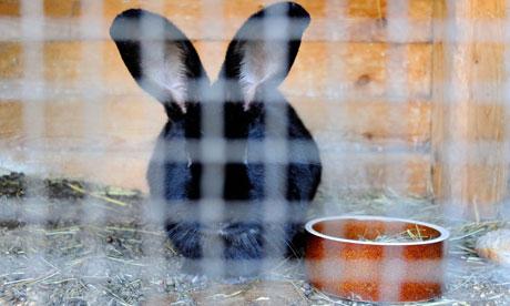 A rabbit hutch