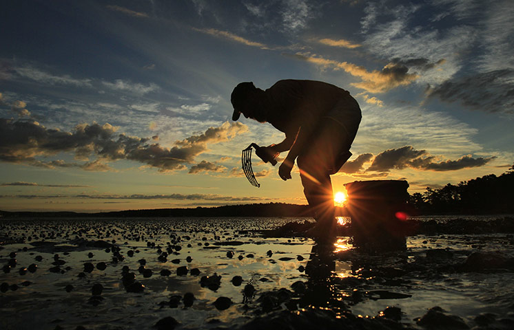 24 hours: Freeport, Maine, USA: A man digs for bloodworms at low tide