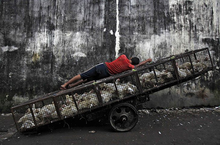 24 hours in pictures: A worker sleeps on a hand cart at a wholesale poultry market in Mumbai