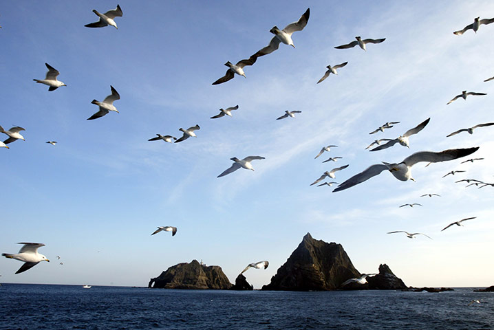 Seagulls fly near the disputed islands  that Seoul recognises as Dokdo