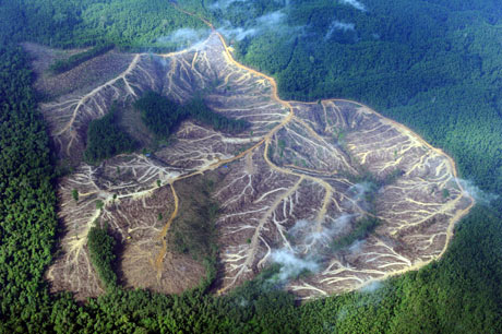 Eyewitness: Deforestation in Sumatra