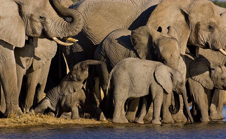 elephants: Elephants Photographed From Underground Bunker