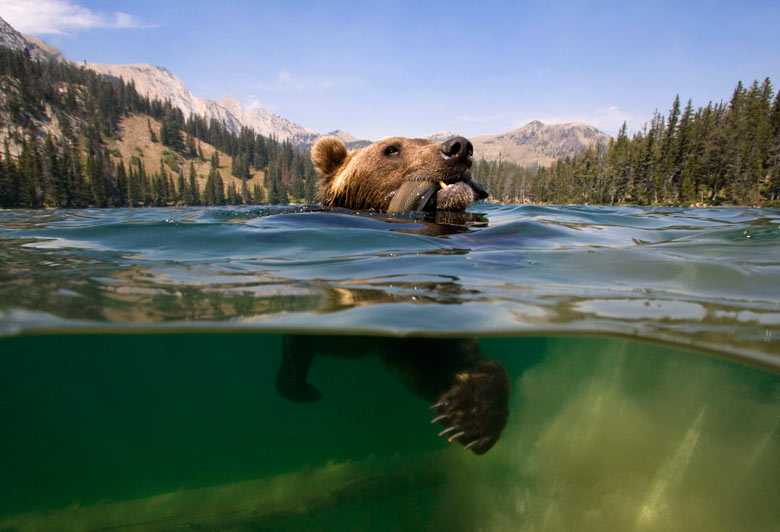 http://static.guim.co.uk/sys-images/Guardian/Pix/pictures/2010/8/30/1283161332095/A-grizzly-bear-catches-a--004.jpg