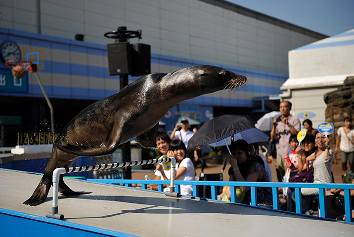 24 hours in pics: A seal jumps over a hurdle at the Sunshine International Aquarium