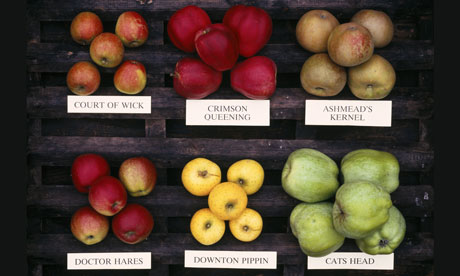 The British apple season is upon us | Life and style | The Guardian