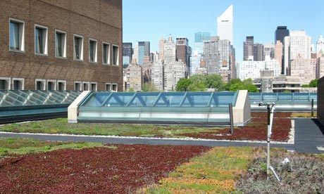 Green roof in New York