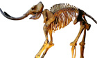 50,000-year-old woolly mammoth skeleton sold on ebay