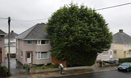 Giant leylandii in suburban front garden incense neighbours | UK ...