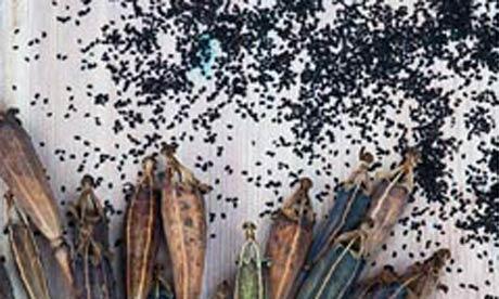 Alys Fowler: Seeds