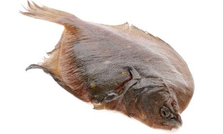 Fresh whole Plaice fish