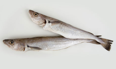 Two whiting fishes