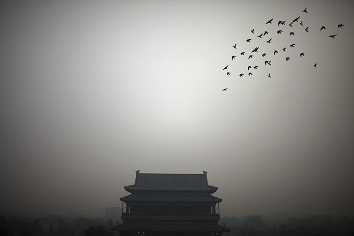 Week in wildlife: A flock of birds fly near the Drum Tower